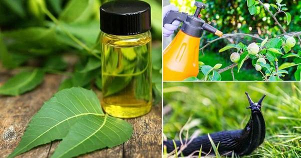 Neem Oil Against White Mold on Plants