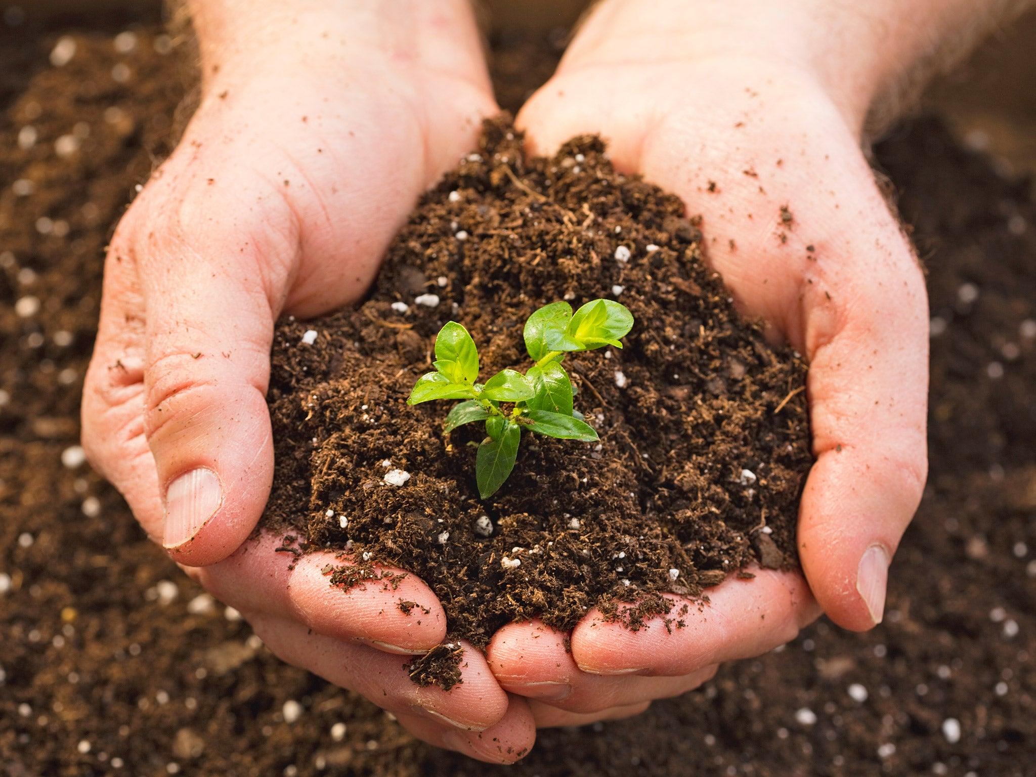 Plant the Soil
