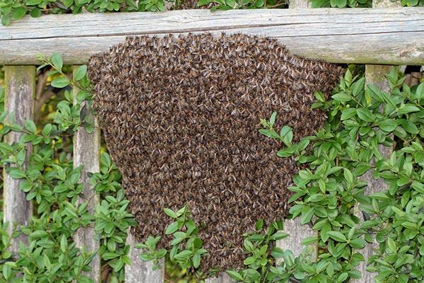 Prevent Yard Nesting