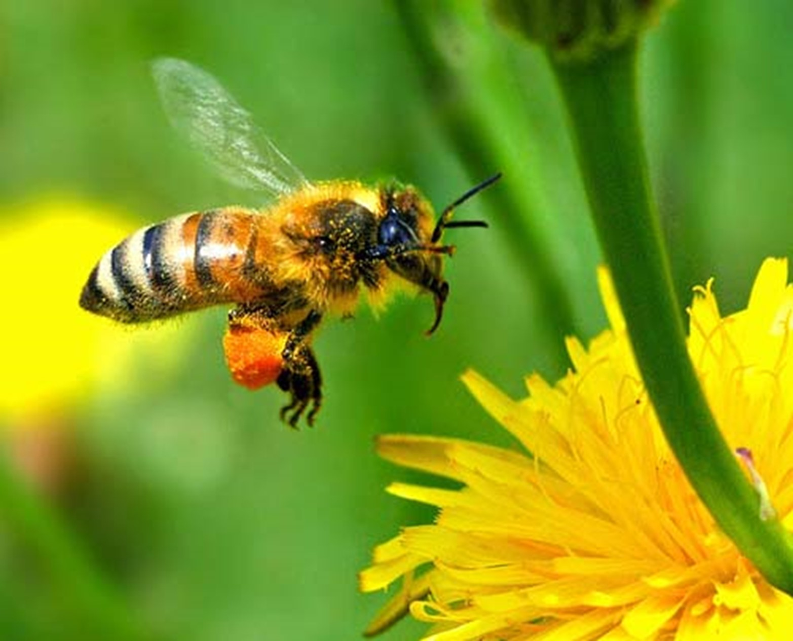 Protecting Your Home from Unwanted Beehives