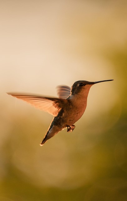 Solutions to the Hummingbird Feeder problem of Ants and Bees