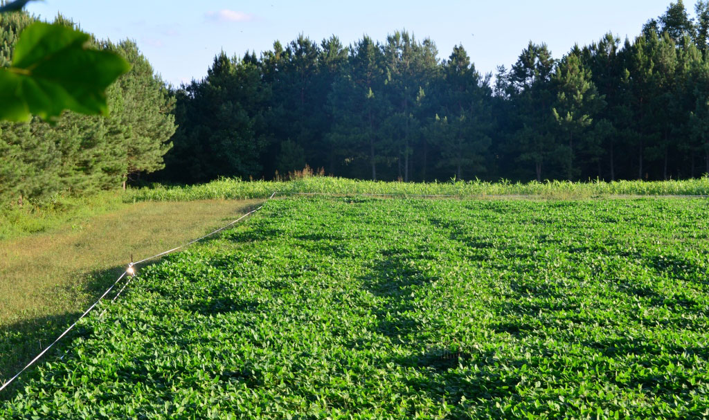 The Best 5 Food Plots to Plant This Year