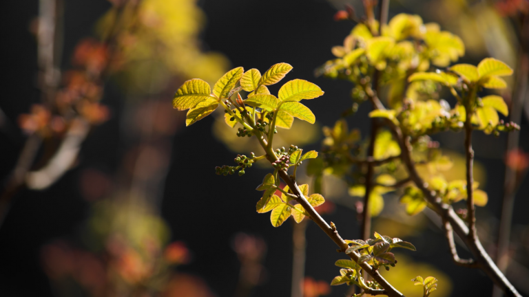 The Poisonous Plants to Avoid While Hiking