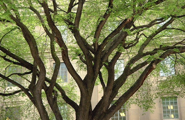 Tips for Removing Tree Limbs