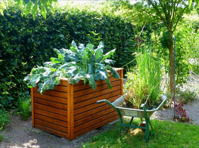 Vegetable Gardening in Arizona – Everything You Need to Know
