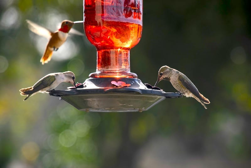 What Should You Hang A Humming bird Feeder On