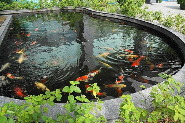 fishes.