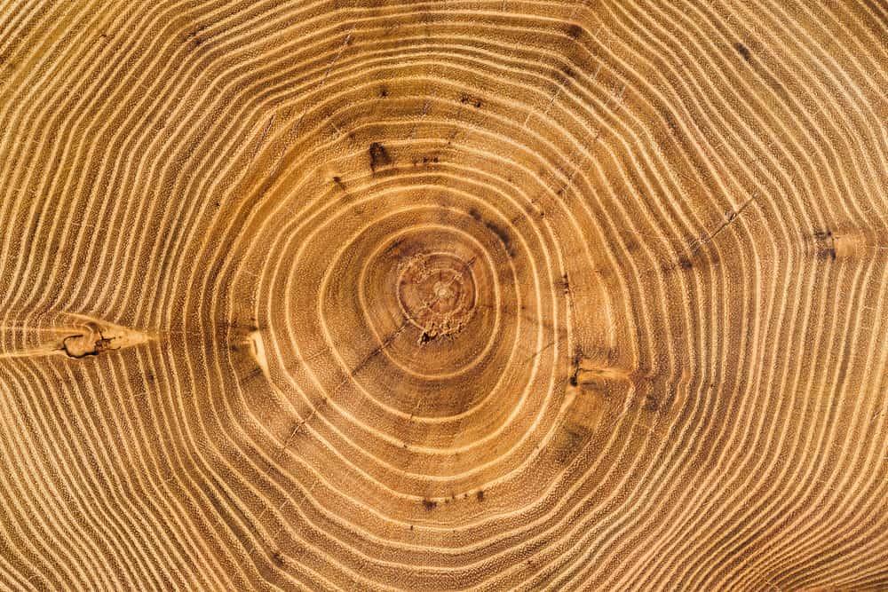 Acacia Wood Has Irregular Grain Structures