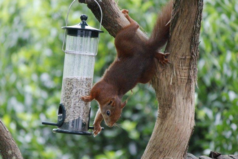 15 Best Squirrel Proof Bird Feeders!