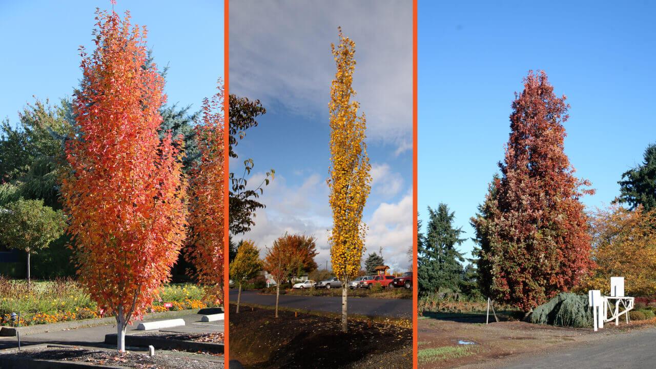 Amazing Columnar Trees