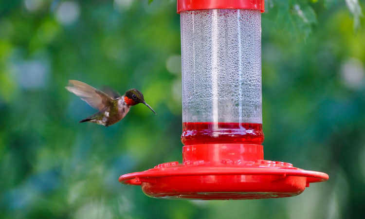 Best Glass Hummingbird Feeders