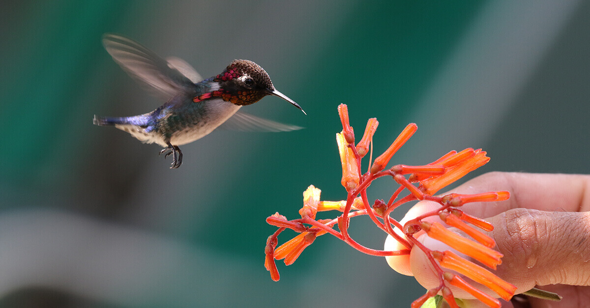 Facts You Never Knew About Hummingbirds
