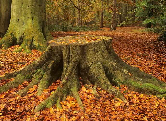 How Does Epsom Salt Work on Tree Stumps