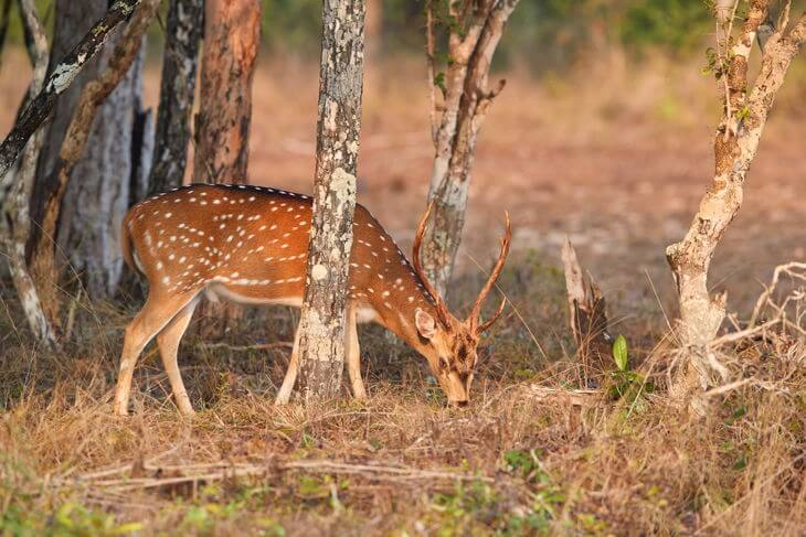 The Ultimate Guide to Deer Scents