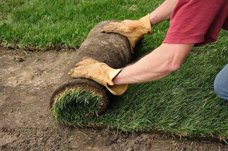 Turf War Sod Vs Seed-Garden Weasel