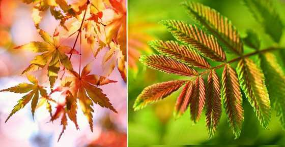 Types of Tree Leaves with Pictures for Easy Identification