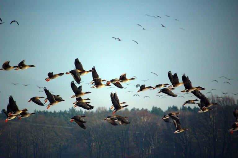 When Is Breeding Season for Wild Birds