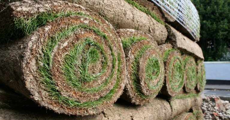 Where to Buy Sod (And How to Save Money Doing It)