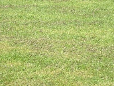Why Do Lawns Develop Bumps
