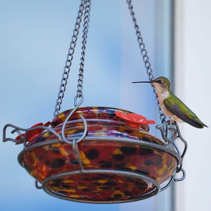 top fill hummingbird feeders